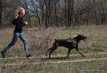 dogsport-canicross