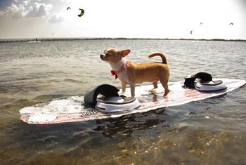 kitesurf-dog-1
