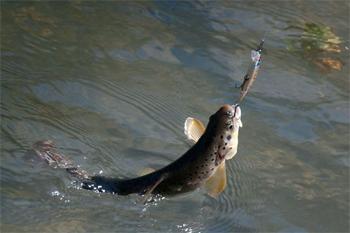 sport-fishing-boat-angling